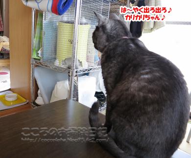Lusumoribu1-2012.jpg