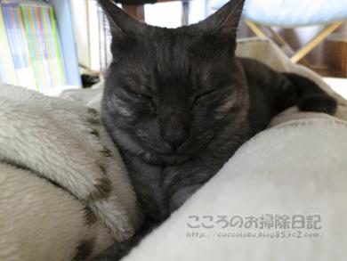 aashimotoribu003-10-2012.jpg