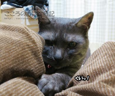 asoburibu001-2012_20120622204338.jpg