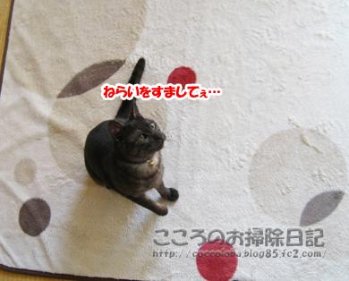 asoburibu1-2011.jpg