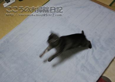 asoburibu2-2011.jpg