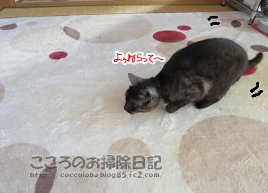 asoburibu7-2011.jpg