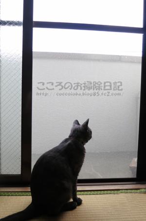berandaribu001-09-2012.jpg