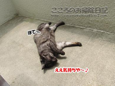 berandaribu001-2012_20120509151042.jpg