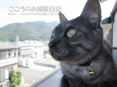 berandaribu004-09-2012.jpg