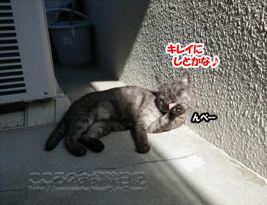 berandaribu005-08-2012.jpg