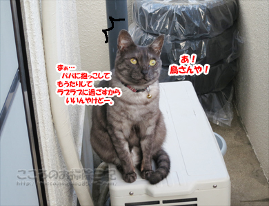 berandaribu006-09-2012.jpg