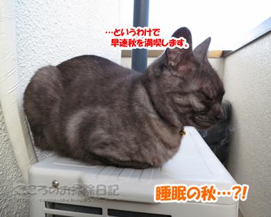 berandaribu007-09-2012.jpg