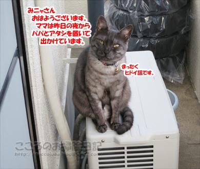 berandaribu008-09-2012.jpg