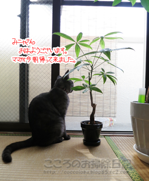 berandaribu010-09-2012.jpg