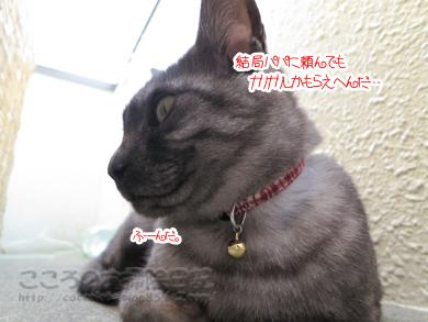 berandaribu011-09-2012.jpg