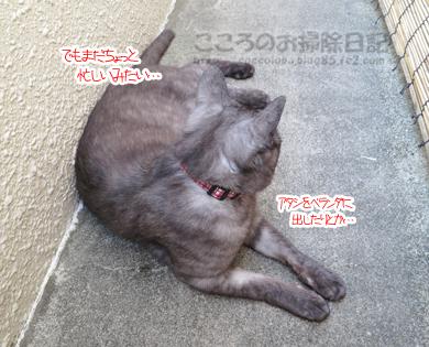 berandaribu013-09-2012.jpg