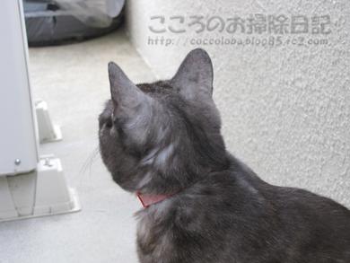 berandaribu014-2012.jpg