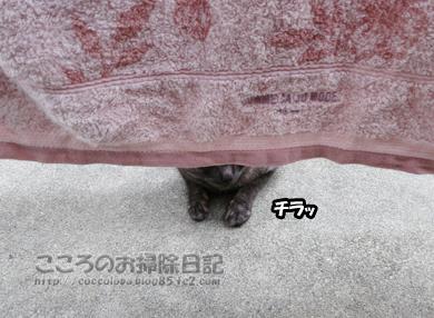 berandaribu025-2012.jpg