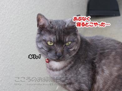 berandaribu1-2012_20120413165216.jpg