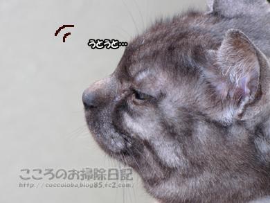 berandaribu2-2012_20120413165215.jpg