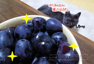 budoutoribu001-11-2012.jpg