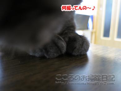 chikairibu-2012.jpg