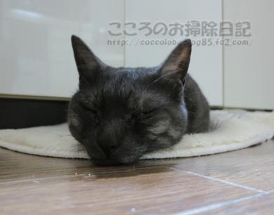daidokororibu001-2012.jpg