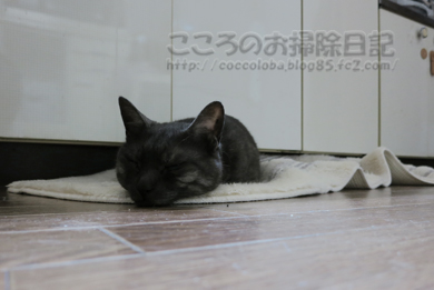 daidokororibu002-2012.jpg