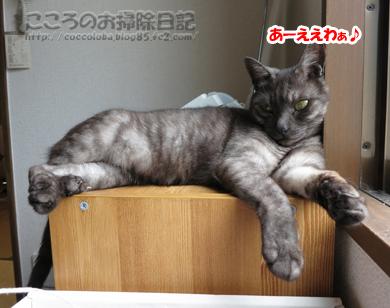denwayokoribu001-07-2012.jpg