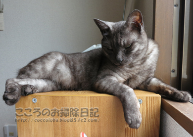 denwayokoribu004-07-2012.jpg