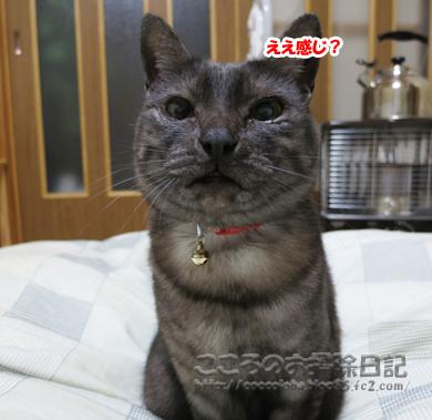 eekanjiribu-2011_20111209192111.jpg
