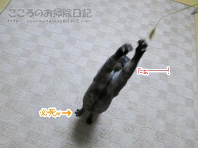enokorotoribu009-10-2012.jpg