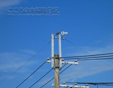 fukei002-09-2012.jpg