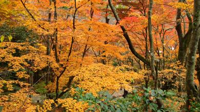 fukei007-11-2012.jpg