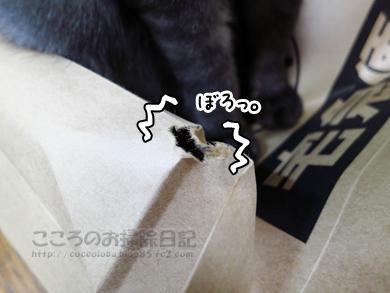 fukuroribu001-11-2012.jpg