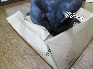 fukuroribu002-11-2012.jpg