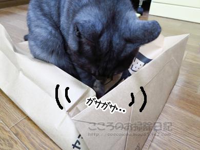 fukuroribu003-11-2012.jpg
