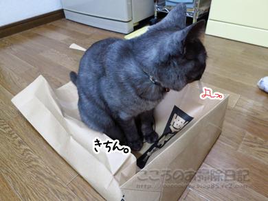 fukuroribu004-11-2012.jpg