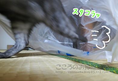 fukuroribu005-09-2012.jpg