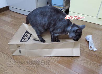 fukuroribu005-11-2012.jpg