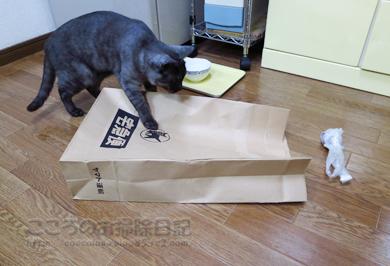 fukuroribu006-11-2012.jpg