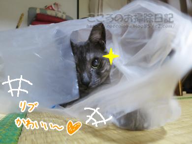 fukuroribu007-09-2012.jpg