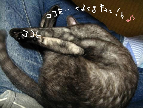 furoshikiribu.jpg