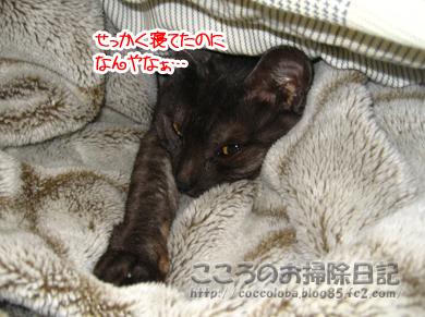 futonribu-2011.jpg