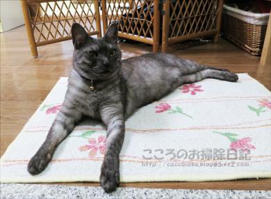 genkanribu005-08-2012.jpg