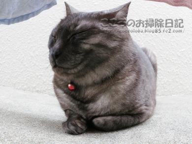 gyoganribu001-2012.jpg