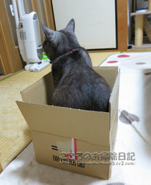 hakotoribu001-2012.jpg