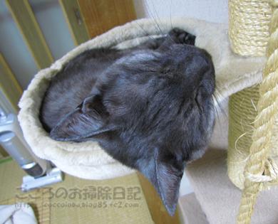 hanmokkuribu002-08-2012.jpg