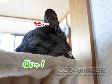 hanmokkuribu003-07-2012.jpg
