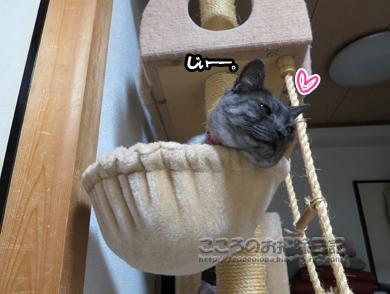 hanmokkuribu003-10-2012.jpg