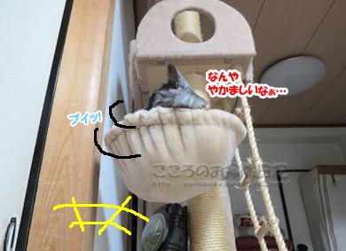 hanmokkuribu004-08-2012.jpg
