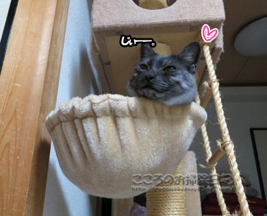 hanmokkuribu004-10-2012.jpg