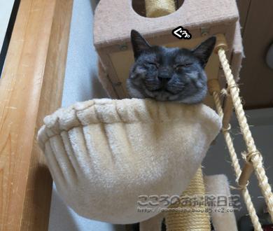 hanmokkuribu005-10-2012.jpg