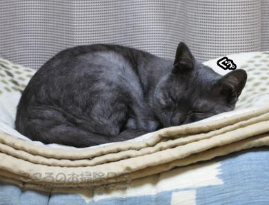hanmokkuribu006-10-2012.jpg